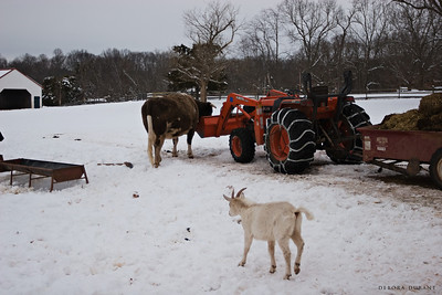 tractor at psas