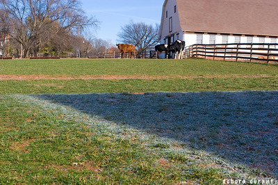 barn shaped frost at ps