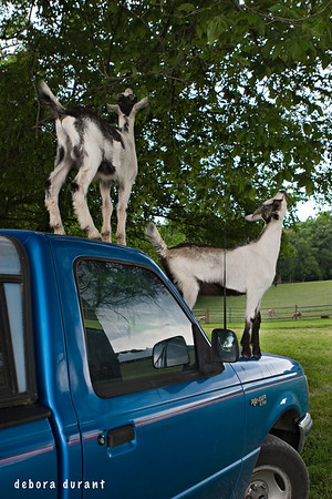 lenny and jeremy on my truck