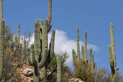 saguaro arizona csp