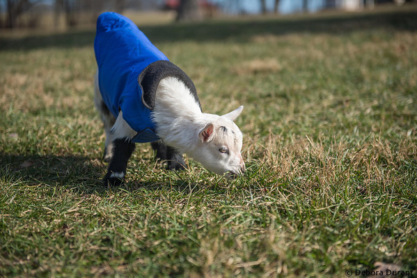 Zachary wearing his little blue coat