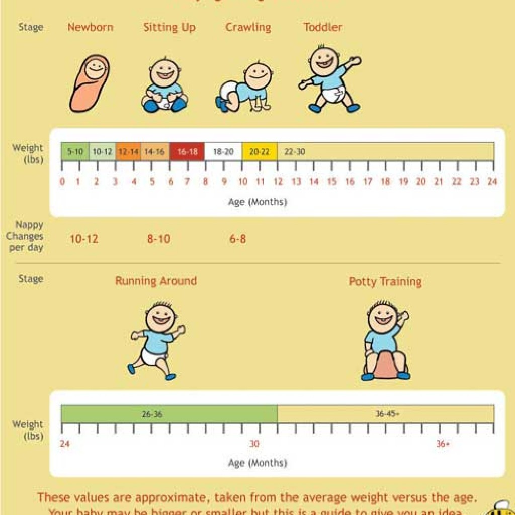 24 Baby Weight Charts