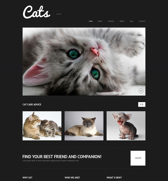 cat dark wordpress themes