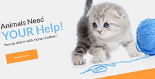 best pest vets wordpress themes feature