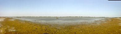 The wetlands!