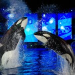 Create Awe Inspiring Memories at SeaWorld's Christmas Celebration