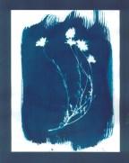 cyanotypes fleurs - 02