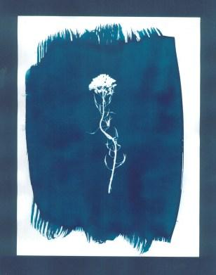 cyanotypes fleurs - 05