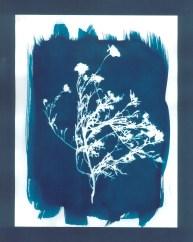 cyanotypes fleurs - 16