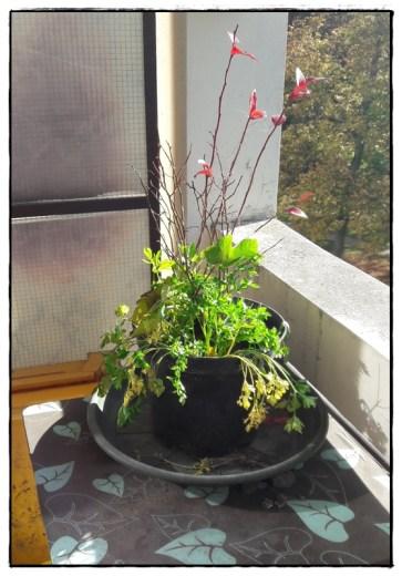 quelques plantes du jardin