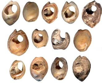 Pierced Shells