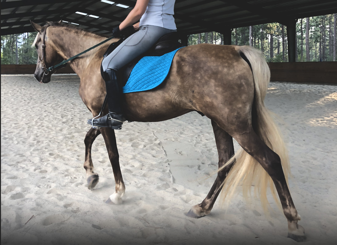 Gaited horse with rider