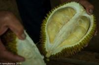 Durian Lamseujen