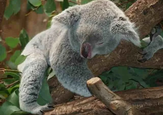 Australia donazioni star Hollywood