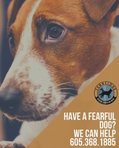 Picture of fearful dog - training and behavior for fearful and shy dogs