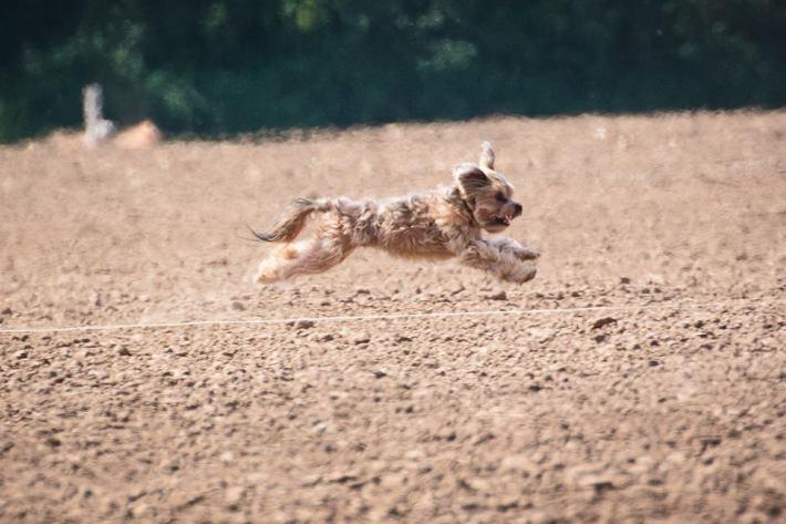 Dog Training Goals