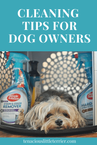 cleaning tips for dog owners