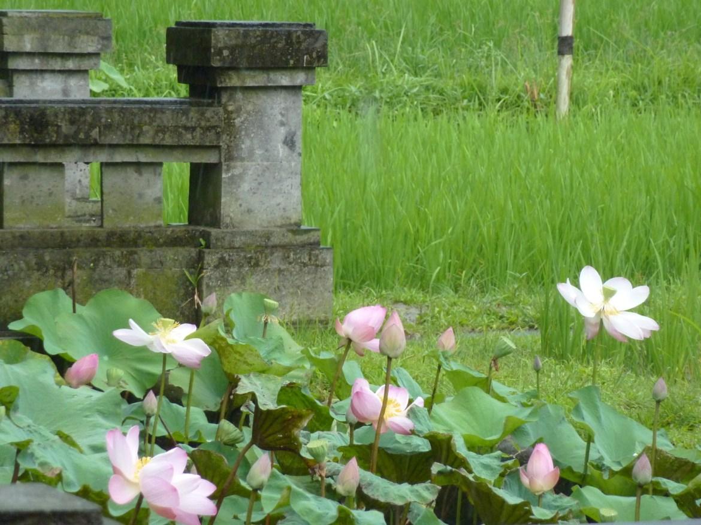 6.Fleurs barrières  ©