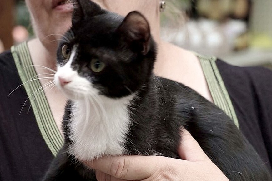Adopter un chat en association Le chat libre toulouse