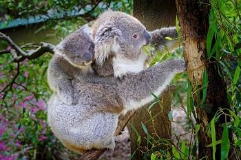 koala challenge el nuevo reto viral para gente fitness