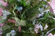 flat leafe parsley