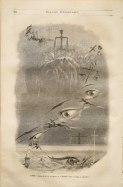 10. J.J. Grandville. Premier rêve. Crime et expiation. 1847.