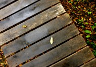 wooden deck path