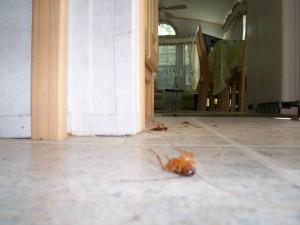 evitar las cucarachas en casa