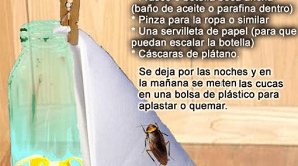 trampa casera para cucarachas