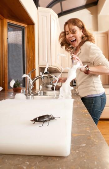 cucarachas peque as en la cocina teneplagas