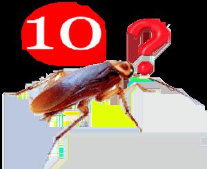 10 cosas que no sabes de las cucarachas