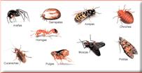 Tipos de Plagas