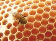 colmena abejas