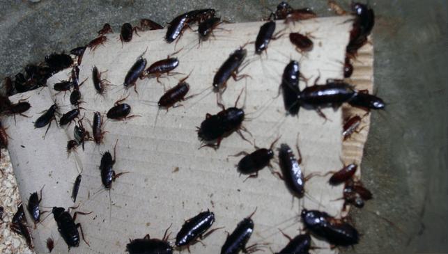 eliminar cucarachas con garantía
