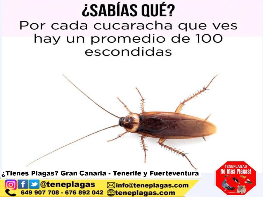 Sabias que si ves una cucaracha hay mas seguro