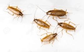 cucarachas en la cocina gran canaria