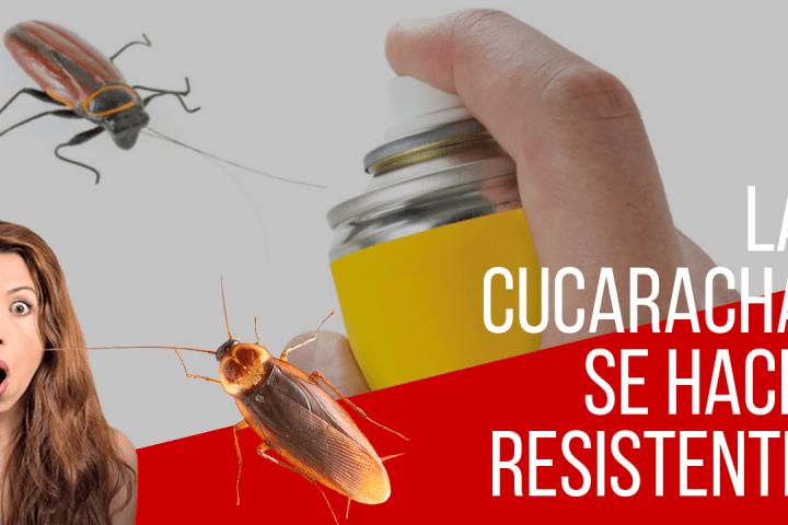 Las cucarachas se están volviendo resistentes a los insecticidas