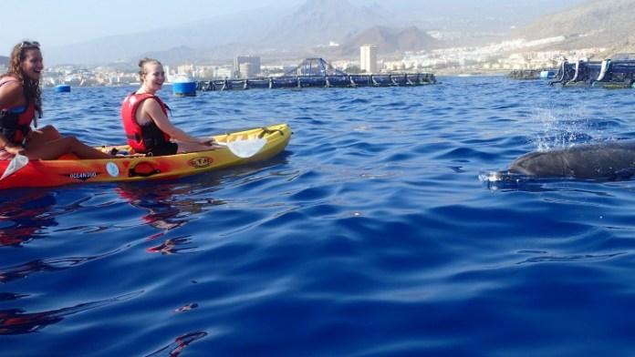 Kayak a Tenerife con i delfini