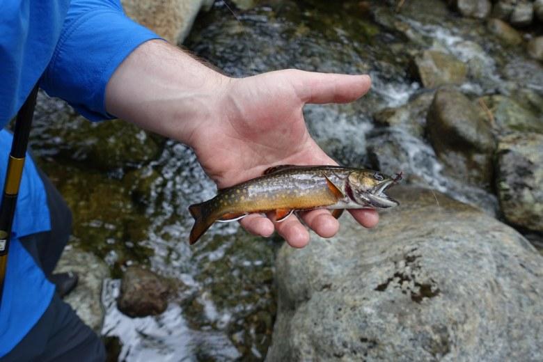 Tenkara Adirondacks New York - Adam Klagsbrun - typical brook trout