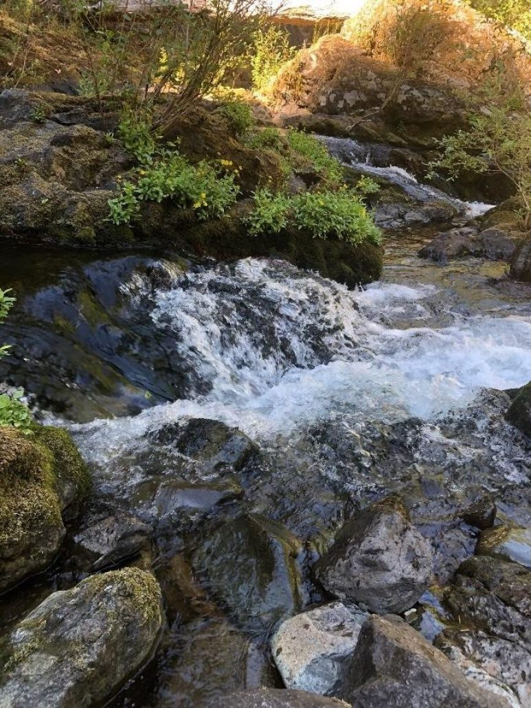Chris Ricard - Sounds of Silence - Small Falls