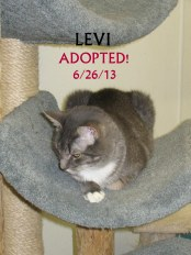 LEVI ADOPTED