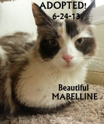 mabelline ADOPTED