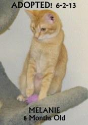 Melanie AKA Tiger Lily - Adopted 6-2-13