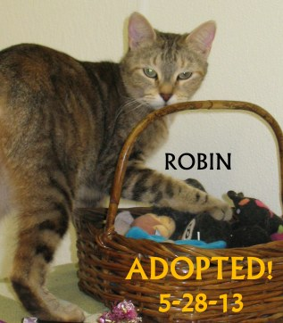ROBIN ADOPTED