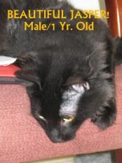 Sweet Boy Jasper! ADOPTED 9/8/13