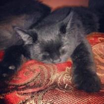 Turbo sleeping