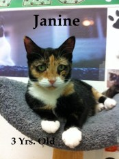 Janine - Adopted 12-3-13