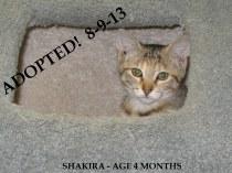 SHAKIRA - 4 Months