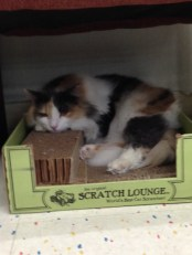 Crystal Lounging on the scratching boards!