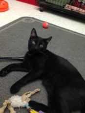 Riddick - 7 Months old & so playful & sweet!